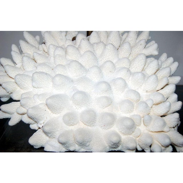 Coral Coral Finger Table Lamp White For Sale - Image 7 of 9
