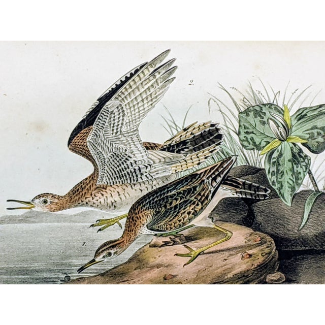 Realism 1940s John James Audubon Hand-Colored Bartramian Sandpiper Lithograph by Jt Bowen For Sale - Image 3 of 8