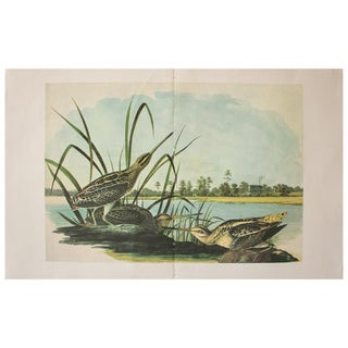 1966 Cottage Print of American Snipe by Audubon For Sale