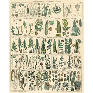 German Fern Print, 1843 For Sale