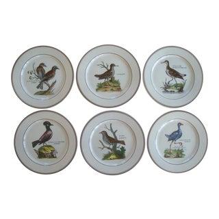 Villeroy & Boch Paradiso Bird Plates, Wall Decor Set of 6 For Sale