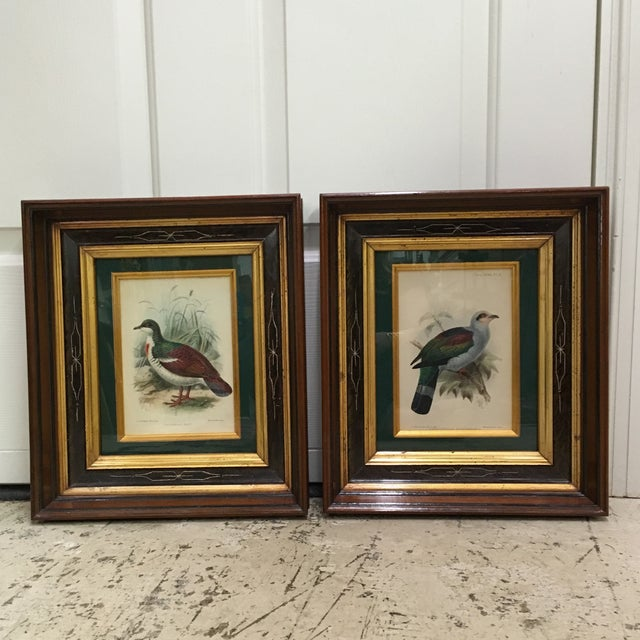 Antique circa 1842-1912 J.G. Koulemans hand colored bird lithographs. Sold as a pair, and come in period frames.