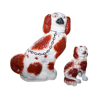English Staffordshire King Charles Spaniels