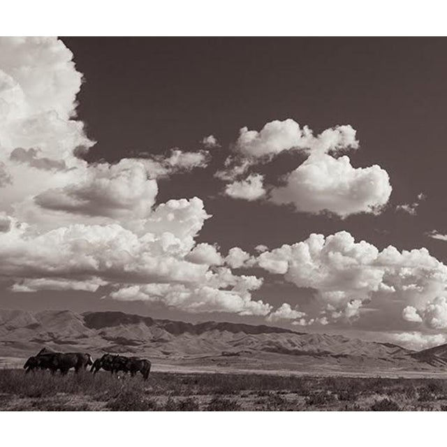 Americana Kimerlee Curyl, Desert Sanctuary, 2013 For Sale - Image 3 of 5