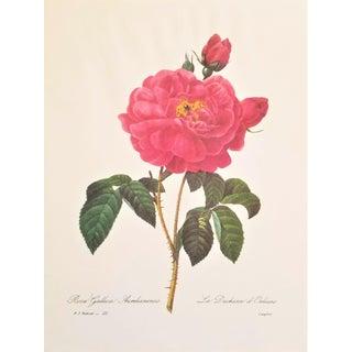 Pierre-Joseph Redouté Reproduction Red Rose Botanical Print For Sale