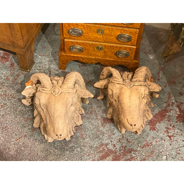 19th Century French Terra Cotta Rams Head For Sale - Image 5 of 6