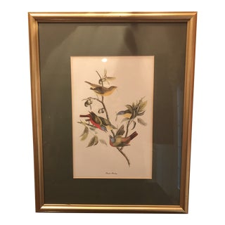 Antique Painted Bunting Birds Framed Bird Print For Sale