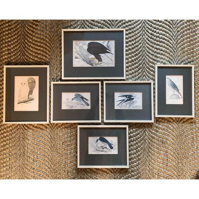 Off-white Set of 6 1840's Bird Engravings - Framed For Sale - Image 8 of 11