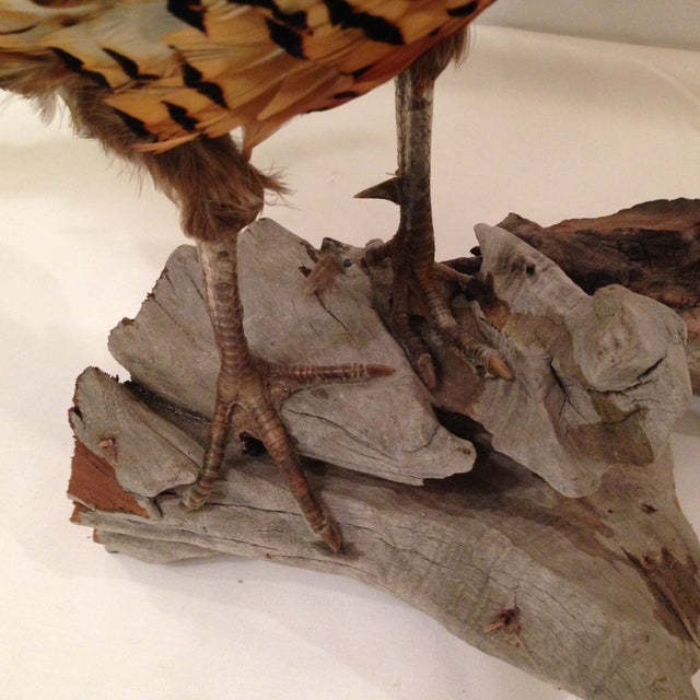 Stuffed Pheasant Mounted on Driftwood - Image 6 of 6