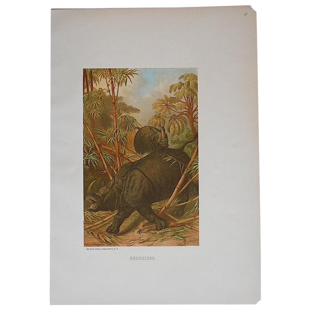 Antique Animal Lithographs, Rhinocerous For Sale