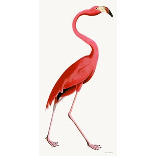 Pink Flamingo Styled After Olof Rudbeck - Plate 38 (Cfa-Wd)