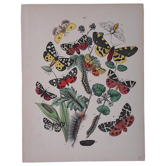 Antique Chromolithograph Butterflies/Moths For Sale