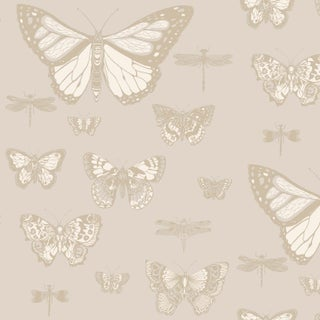 Cole & Son Butterflies & Dragons Classic Style Wallpaper - 11 Yard Roll For Sale
