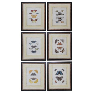 Beautiful Set of Six French 19th Century Framed Hand Color Engraved Butterfly For Sale