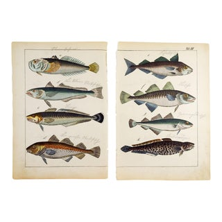 Hand Colored Fish Woodcut Prints - a Pair For Sale