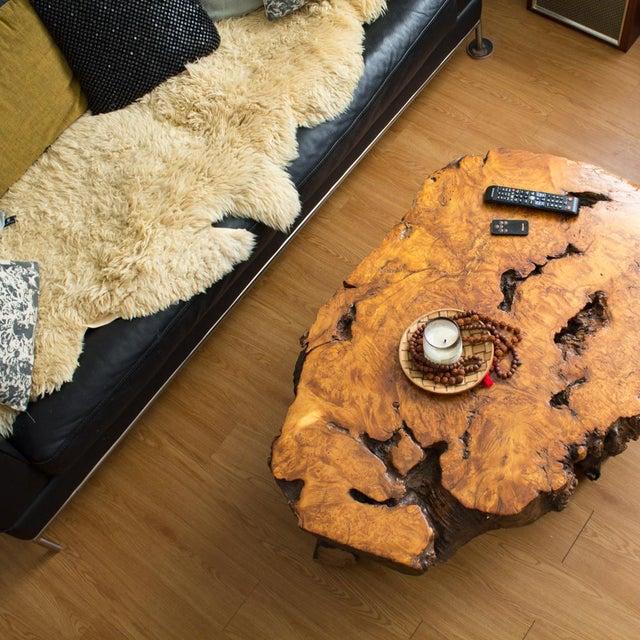 Orange Live Edge Maple Burlwood Coffee Table For Sale - Image 8 of 11