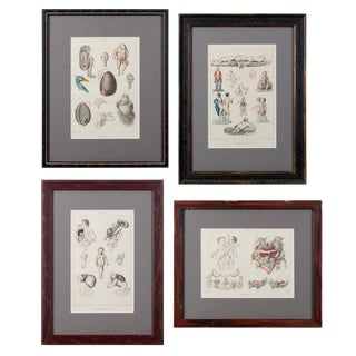 Monstruosites, Engravings From Isidore Geoffrey Sainte-Hilaire, Paris C. 1832 - Set of 4 For Sale