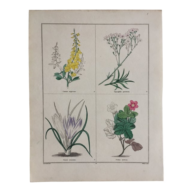 1853 the Botanic Garden by Benjamin Maund Print For Sale