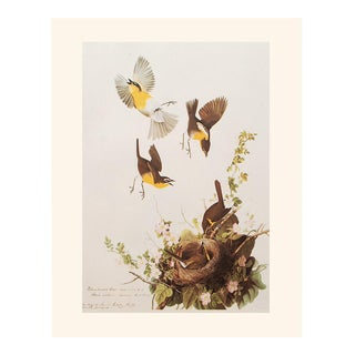 Yellow-Breasted Chat by John J. Audubon, Vintage Cottage Print For Sale