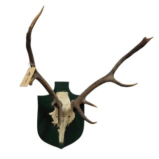 Vintage Deer Trophy Spain Toledao 1983 Uneven Twelve Ends For Sale