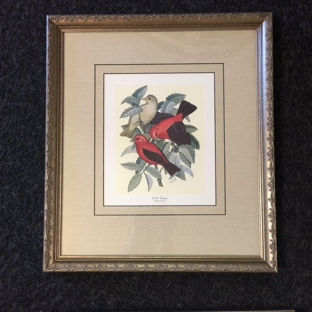 Four professionally framed and double matted prints of bird paintings by Earl O. Henry. Each print is identifying the bird...