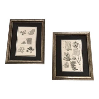 Framed Antique Coral Botanical Engraving Prints - a Pair For Sale