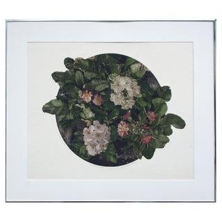 Primula Polyanthus Primroses by John Parker