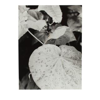 """""""Rain Forest Manoa 3"""" 1970s Black and White Photograph For Sale"""