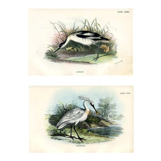 Shorebird Prints, 1896, Pair of Original Lithographs For Sale