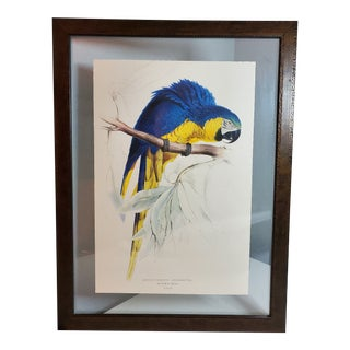 Framed Edward Lear Blue and Gold Macaw Parrot Print For Sale