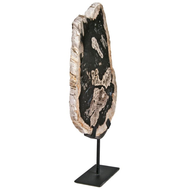 Slice of polished petrified wood in beige and black tones. Presented on a custom iron tabletop stand. Imported from...