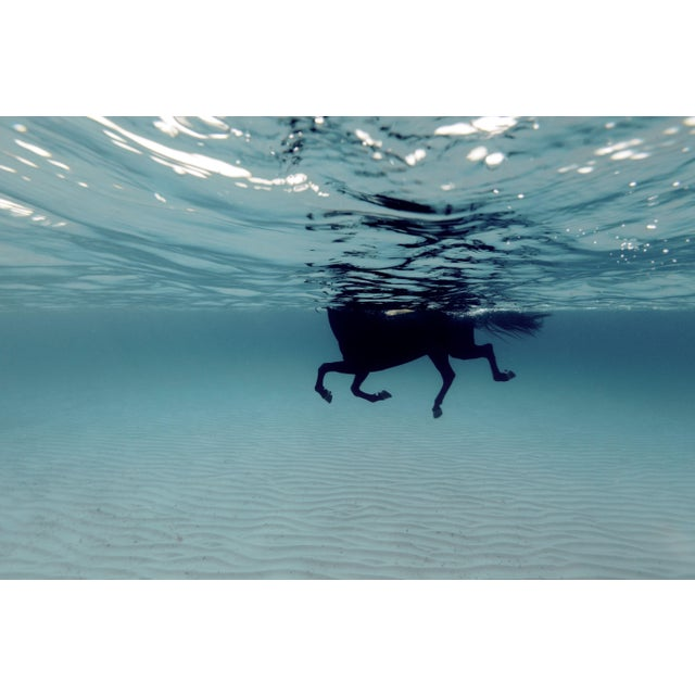 Swimming Horse in the Mediterranean Photograph For Sale