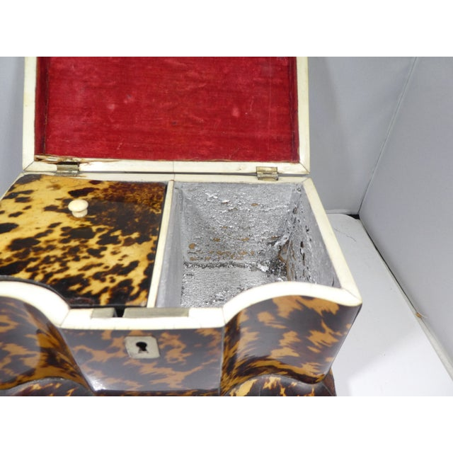 19th Century Tortoise Shell Tea Caddy For Sale In Miami - Image 6 of 13