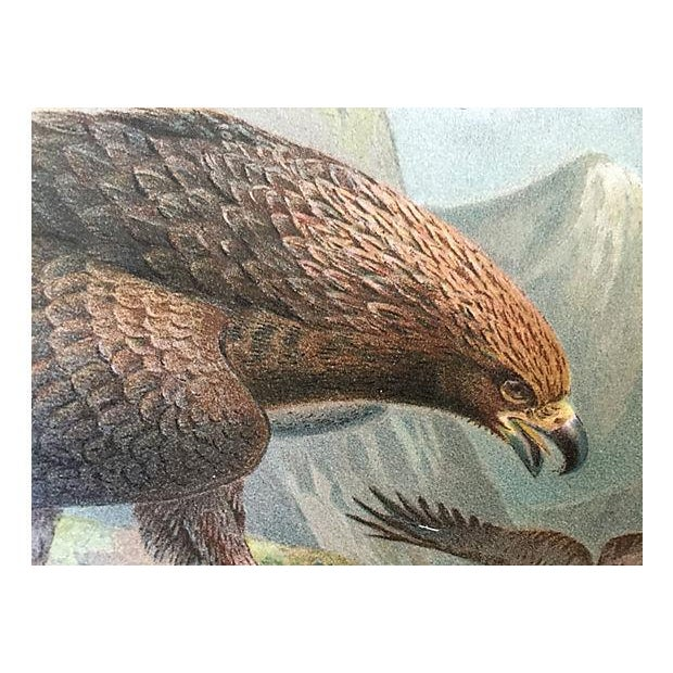 Lodge Antique Golden Eagle Lithograph, C. 1900 For Sale - Image 3 of 5