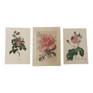 Vintage Prints of Roses - Set of 3