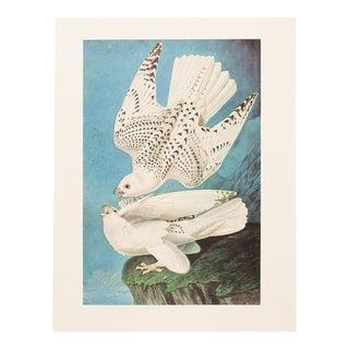 1966 Cottage Lithograph of Gyrfalcon by John James Audubon For Sale