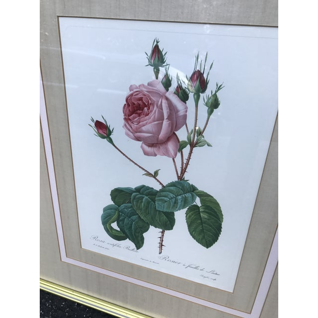 Boho Chic Pierre Joseph Redoute Botanical Rose Large Lithographs - a Pair For Sale - Image 3 of 8