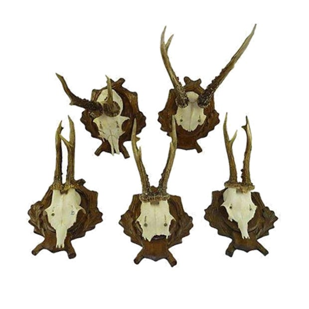 Antique Deer Antler Trophy Mount - Set of 5 - Image 1 of 6