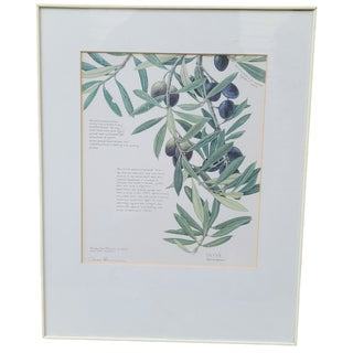 Late 20th Century Olive Botanical Print, Framed For Sale