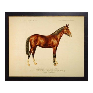 Country Print of Wendel the Horse Bookplate - 18x14 For Sale