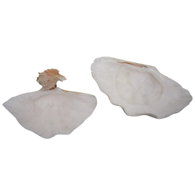 Claim Shells, Pair - Image 1 of 4