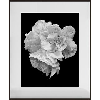 """Ornamental Cabbage"" Contemporary Photograph by Jean Karotkin, Framed For Sale"