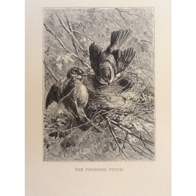 Antique Giacomelli Book Plate Engraving - Image 1 of 2
