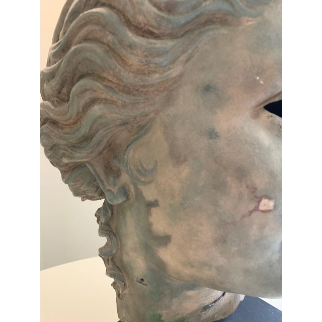 Metal Bust of Adonis, From the British Museum Gift Shop For Sale - Image 7 of 13