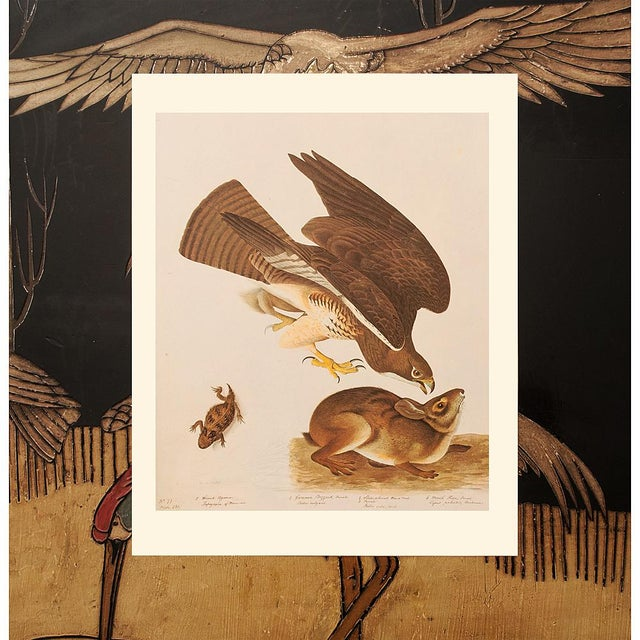 Swaison's Hawk, Marsh Hare and Horned Agarma by Audubon, Vintage Cottage Print For Sale In Dallas - Image 6 of 9