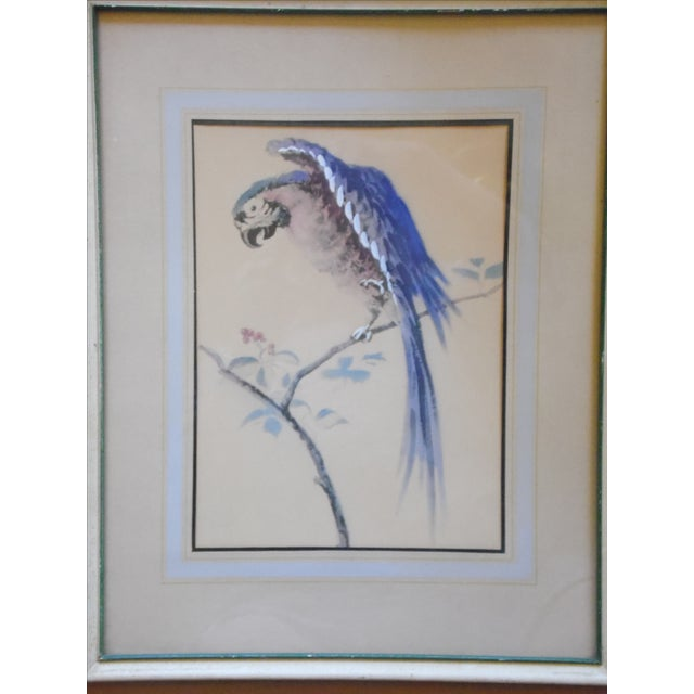 Framed Parrot Picture - Image 3 of 6