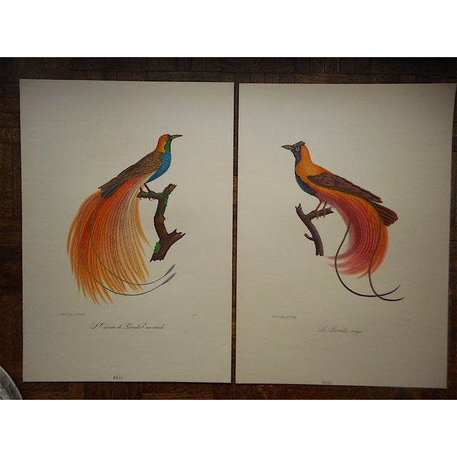 Vintage Tropical Bird Folio Size Lithographs- Pair - Image 3 of 3