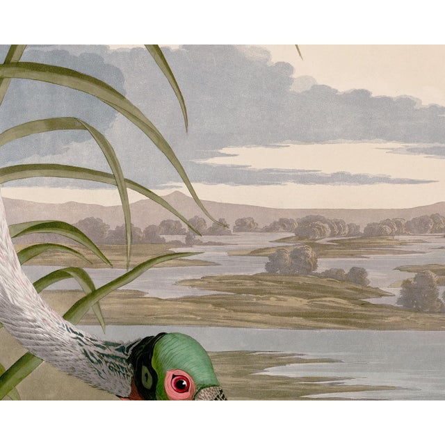 Paper Audubon Roseate Spoonbill Giclee Print For Sale - Image 7 of 8