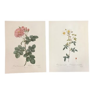 Pair of Pink and White Rose Prints After Pierre-Joseph Redouté For Sale