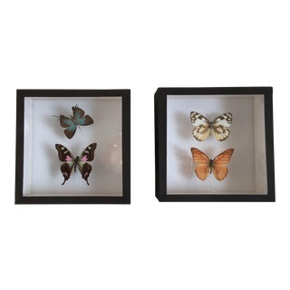 "Deyrolle Paris Butterfly ""Specimens en Boites"" - A Pair"